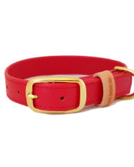 Red collar_2