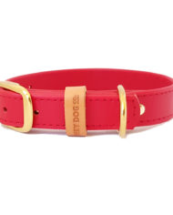 Red collar_3